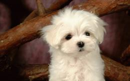 wallpaper small dogs with pics small images of dogs wallpaper 321