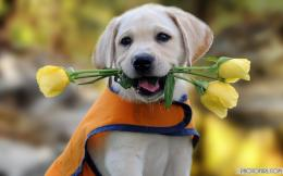 HD Dog Wallpapers | Free Wallpapers 586