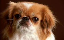 Small Dog Wallpapers1680x1050369837 923