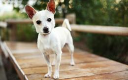 Small dog wallpapers and imageswallpapers, pictures, photos 692