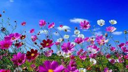 Spring Flowers Wallpapers | HD Wallpapers Early 634