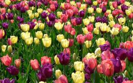 wallpapers: Spring Flowers Wallpapers 1966