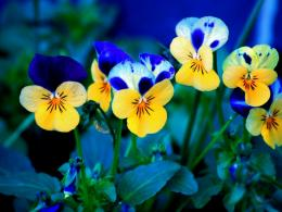 spring flowers wallpapers 36142 1152x864 jpg 948