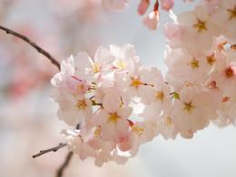 Amazing Spring Flowers Wallpapers ~ 521 Entertainment World 101