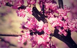 spring flowers wallpaper by venomxbaby on DeviantArt 1625