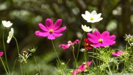spring flowers hd wallpaper 150x150 828