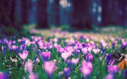 Spring Flower Park Wallpapers | HD Wallpapers 423