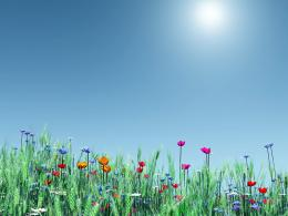 Pictures World: Spring flower nice wallpaper 609