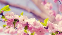 Spring Flower Wallpapers, wallpaper, Spring Flower Wallpapers hd 1088