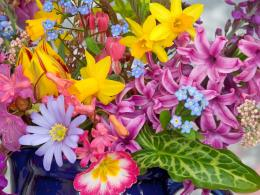Spring Flowers From the Garden Wallpapers | HD Wallpapers 1302