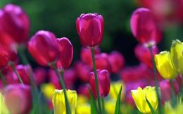 wallpapers: Spring Flowers Wallpapers 360