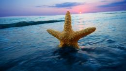 Starfish wallpaper #31416 202