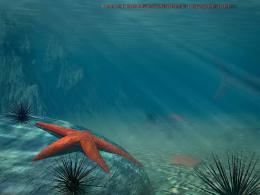 Beautiful Wallpapers: Star Fish Wallpapers 1630