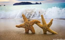 Starfish Wallpapers, Download Charming Starfishes HD Wallpaper Free 1216