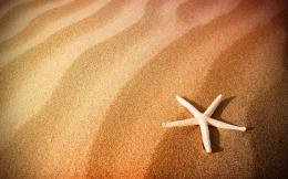 Beach sand starfish Wallpapers Pictures Photos Images 1898
