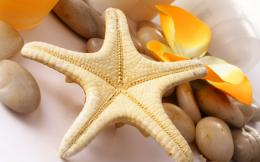 Starfish Wallpapers Pictures Photos Images 339