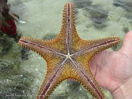 Star Fish Wallpapers 1174