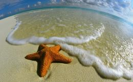 Starfish wallpaper 1680x1050 953