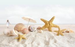 wallpapers: Starfish Wallpapers 245