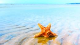 Starfish wallpaper 1920x1080 in waterWallpapers 3d for desktop, 3d 1483