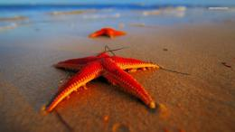 Starfish wallpaper 1366x768 961