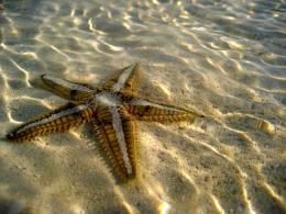 Starfish HD Wallpapers, beautiful starfish pictures, image of starfish 1682