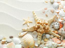 Seashells Starfish Hd Wallpaper | Wallpaper List 178