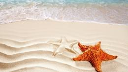 Starfish ocean sea sealife fish bokeh wallpaper | 1920x1080 | 418088 1653
