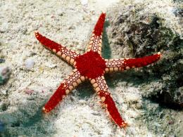 Best Wallpapers: Starfish Wallpapers 1242