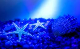 wallpapers: Starfish Wallpapers 1657