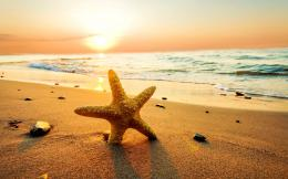 Starfish on the Beach at Sunset wallpaper 582