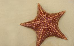 Starfish wallpaper 1920x1200 1748