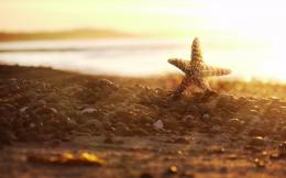 Cool Starfish Wallpaper 1920x1200px #777411 1595