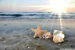 Starfish Wallpapers, Download Charming Starfishes HD Wallpaper Free 229