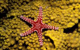 Starfish Desktop Wallpapers | Starfish Images Free | Cool Wallpapers 1516