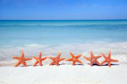 Beach Starfish Wallpaper | Wallpaper Download 1086