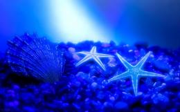Starfish wallpaper | Wallpaper 140