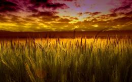 Sunset Field HD Wallpapers 1789
