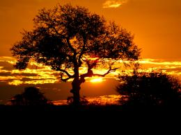 Kruger Park Sunset, South Africa wallpapers 1756