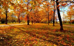 : The Wallpaper above is Autumn park leaves sunset Wallpaper 1132