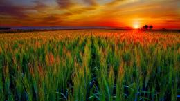 top hd wallpapers of field sunset free download best hd wallpapers of 1969