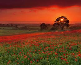 field in sunset wallpaper in nature wallpapers with all resolutions 151