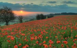 Download Poppy Field At Sunset Nature Hd Wallpaper X 1192