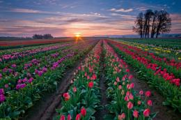 Spring Sunset Flowers Field Wallpaper HD jpg#SUNSET%20ON%20FIELD%20OF 538