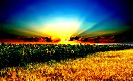 Landscapes field Sunflowers grass sunset 1206
