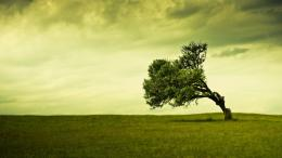 HD Tree Background Wallpapers Free Green Trees Photos Photography 101