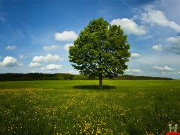 Alone Tree In Green Field HD Wallpaper 294
