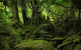 Moss Covered Stones Trees HD Nature Wallpapers 1569
