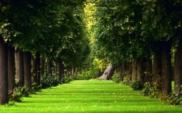 Summer Avenue Trees Wallpapers Pictures Photos Images 1043