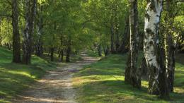 Trees Wallpapers, Forest, Wallpaper, Trees Full HD Wallpapers, Trees 335
